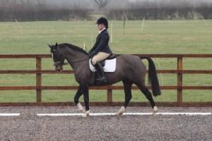 Clara Peake Willicote Feb Show for Central Horse News small
