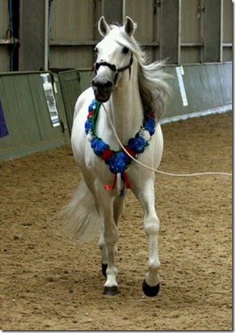United Saddlebred World Breeds In Hand Supreme for Central Horse News