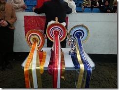 Birmingham Childrens Hospital Show Rosettes for Central Horse News