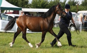 alison wooderson laurtom lazarc1 for Central Horse News