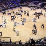 Horses led to safety