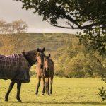 horse,animal,nature,rural,autumn